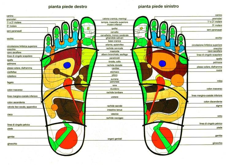 Riflessologia-plantare-La-pianta-dei-piedi-schema